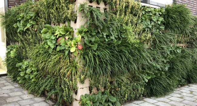 Foto van een verticale tuin